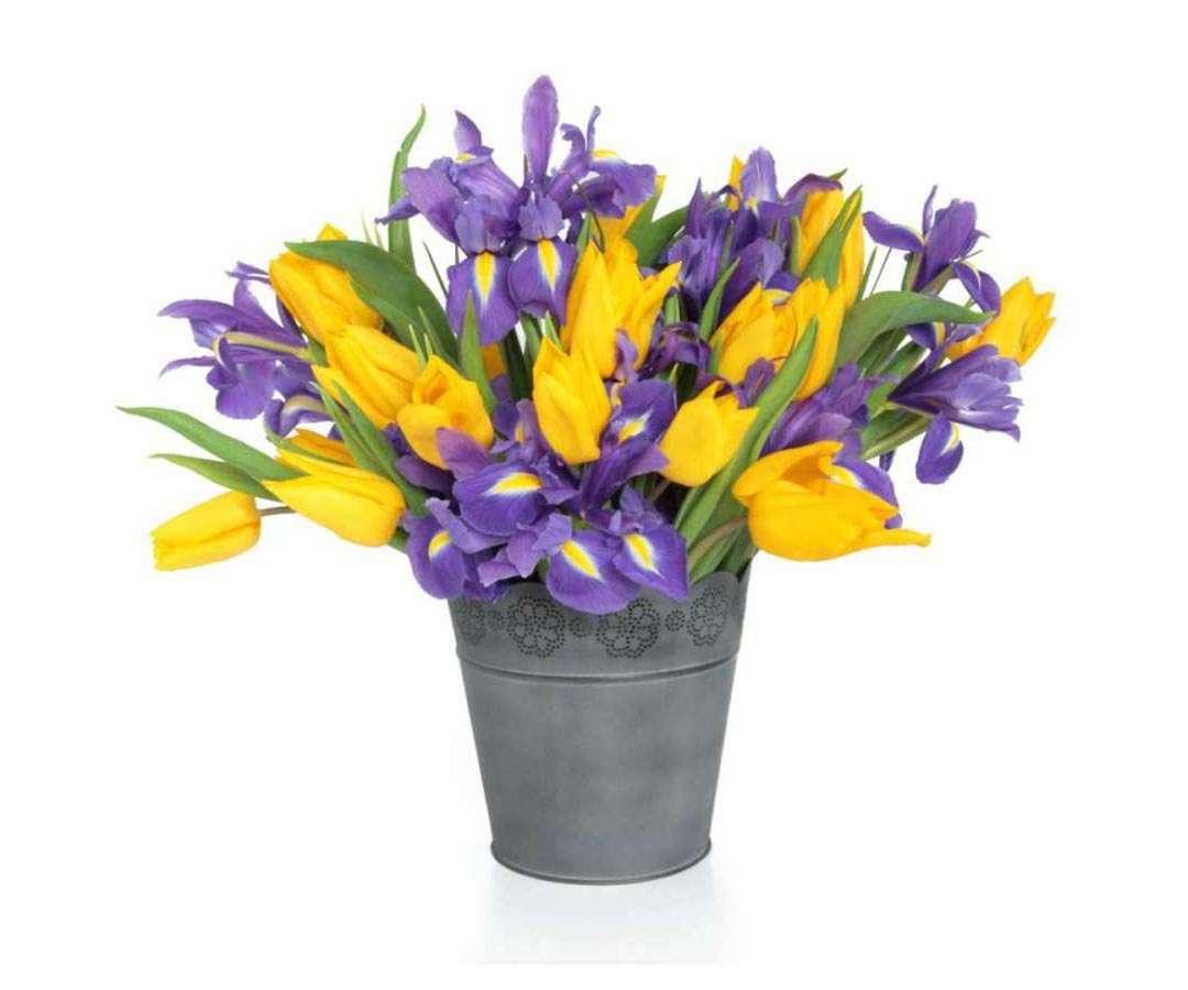 Tulips & Iris