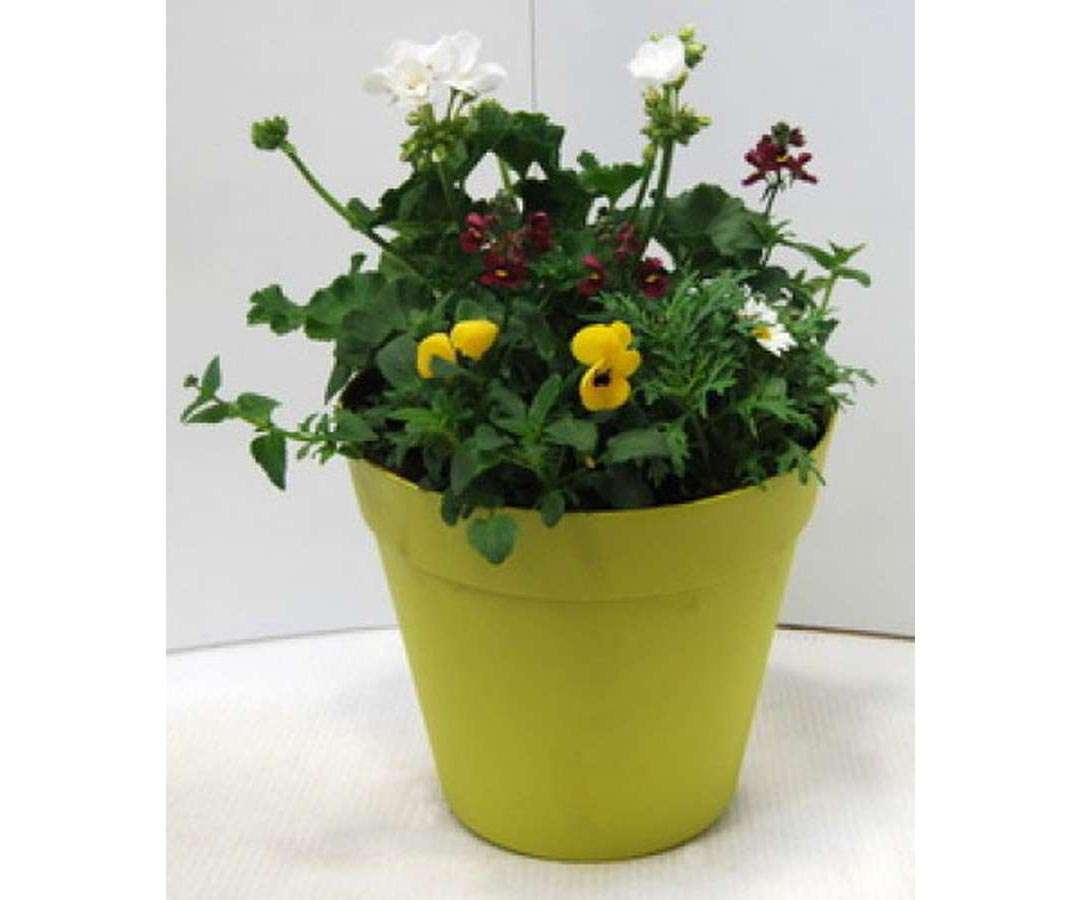 Green Big Pot Planter